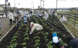 園元バイパスで花植ボランティア活動が行われました!