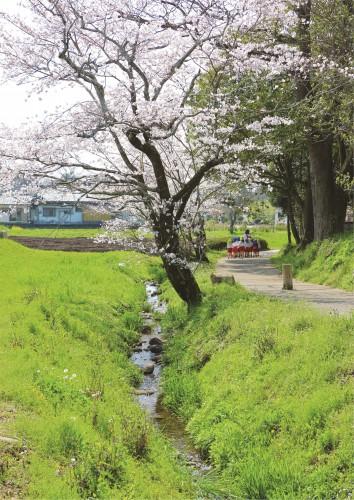 春の記紀の道