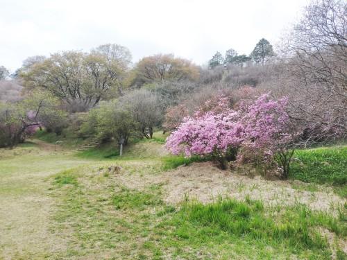 3/17 高取山登山道入口