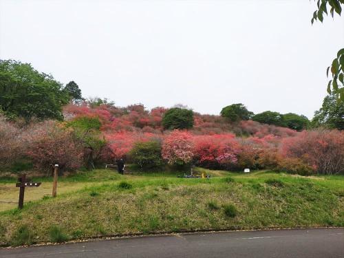 20210331開花情報 (13)